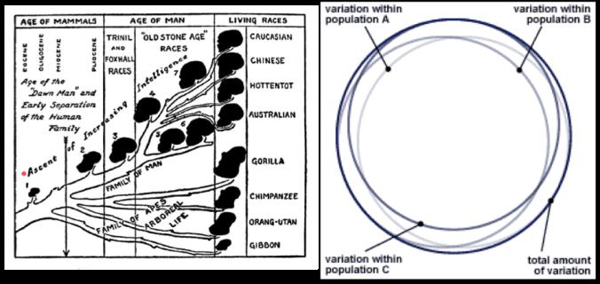 racial-tree-genetic-variation-combo