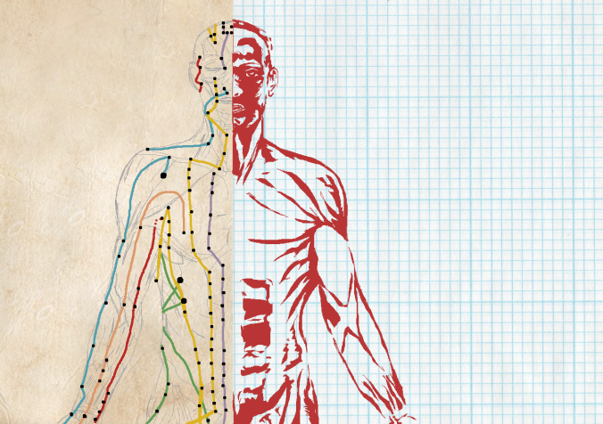 An image of a bisected human, showing an acupuncture map on one side and a muscle map on the other side.